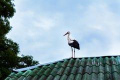 De ooievaar zit op het dak van het huis, tegen de achtergrond van de blauwe hemel stock foto's