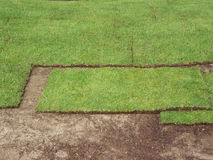 De oorlogen van het gras Stock Fotografie