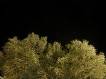 De oorspronkelijke witte sneeuw behandelde bomen met de donkere hemel van de sternacht Stock Foto