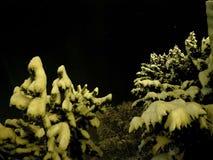 De oorspronkelijke witte sneeuw behandelde bomen met de donkere hemel van de sternacht Stock Afbeelding