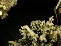 De oorspronkelijke witte sneeuw behandelde bomen met de donkere hemel van de sternacht Stock Fotografie