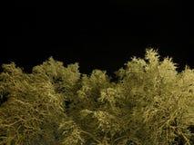 De oorspronkelijke witte sneeuw behandelde bomen met de donkere hemel van de sternacht Royalty-vrije Stock Foto's
