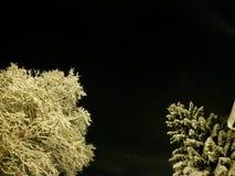 De oorspronkelijke witte sneeuw behandelde bomen met de donkere hemel van de sternacht Stock Foto's