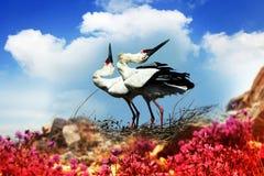 De Oosterse Witte Ooievaar Royalty-vrije Stock Afbeeldingen