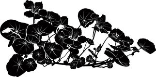 De Oostindische kers bloeit vector Royalty-vrije Stock Afbeeldingen