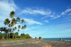 De op zee kust van palmen Stock Fotografie