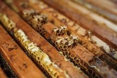 De open bijenkorf met bijen kruipt langs de bijenkorf op honingraat houten kader Bijenteeltconcept stock foto's