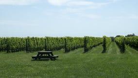 In de open lucht bij de Wijngaard Royalty-vrije Stock Foto's