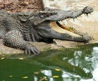 De open mond van de krokodil Stock Afbeeldingen