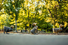 De Openbare Tuin van Boston Royalty-vrije Stock Afbeelding