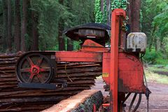 De openings van een sessie houten zaag van de boomboomstam in bos Stock Afbeeldingen
