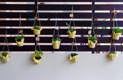 De openluchtgebladerteinstallatie in potten hangt op latten Royalty-vrije Stock Fotografie