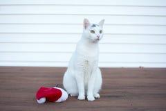 De openluchtzitting van het de kattenportret van de Kerstmispot naast Kerstmis h Stock Fotografie