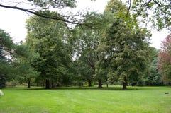 De opheldering van het parkgazon met rond bomen Stock Foto's