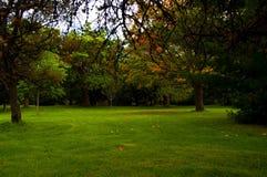 De opheldering van het parkgazon met rond bomen Stock Afbeelding