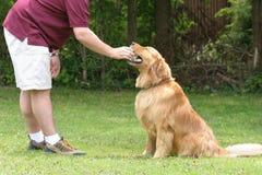 De Opleiding van de Gehoorzaamheid van de hond stock fotografie