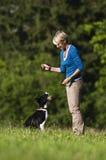 De opleiding van de hond Stock Afbeeldingen