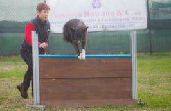 De opleiding van de hond Royalty-vrije Stock Fotografie