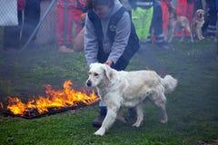 De opleiding van de hond Stock Foto
