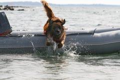 De opleiding van de hond Stock Fotografie