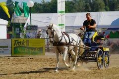 De opleiding van een paard Stock Fotografie