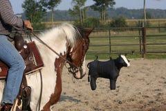 De opleiding van het paard royalty-vrije stock afbeeldingen