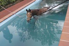 De opleiding van het paard Stock Foto's