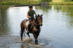 De opleiding van het paard stock fotografie