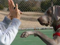 De Opleidingssessie van de hond Stock Foto's