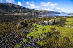 De opmerkelijke en uitgebreide zeewierbanken bij Loch Sunart in de Hooglanden van Schotland royalty-vrije stock foto's