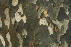 De oppervlakte van de boomboomstam Royalty-vrije Stock Foto