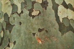De oppervlakte van de boomboomstam Stock Foto's