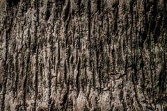 De oppervlakte van de boom Royalty-vrije Stock Foto