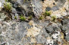 De oppervlakte van de rots Stock Foto's