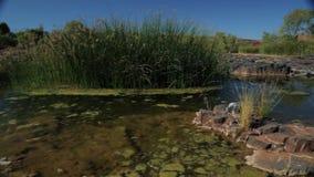 De oppervlakte van een bemoste waterhole stock footage