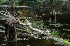 De oppervlakte van een verlaten vijver met drijvende takken, de herfstbladeren en uit het plakken van stompen royalty-vrije stock afbeeldingen