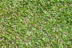 De oppervlakte van het gras Stock Foto's