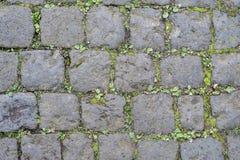 De oppervlakte van de keistraat met onkruid stock foto