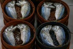 De opstelling van makreelvissen royalty-vrije stock afbeeldingen