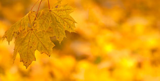 De oranje achtergrond van de herfstbladeren Royalty-vrije Stock Foto