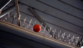 De oranje bal wordt geplakt in anti-anti-pidgeonsNaalden Royalty-vrije Stock Fotografie