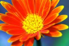 De oranje bloem van het neon royalty-vrije stock fotografie