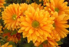De oranje bloemen in de winter Royalty-vrije Stock Afbeeldingen