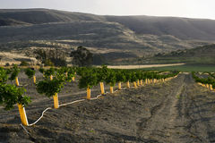 De oranje bosjes van Israël royalty-vrije stock fotografie