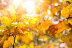 De oranje dalingsbladeren passen de oranje zonsondergang aan Stock Foto