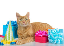 De oranje gestreepte katkat met stelt op witte achtergrond voor Royalty-vrije Stock Fotografie