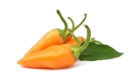 De oranje hete paprika van de Spaanse peperpeper royalty-vrije stock foto's