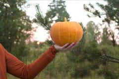 De oranje pompoen van de vrouwenholding ter beschikking Royalty-vrije Stock Foto's