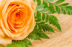 De oranje rozen bloeien binnen Mooie vers op een lijst Stock Fotografie