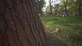 De oranje verdwaalde kat in Odessa Ukraine-stadspark die die op de boom mauwen met heldere zon wordt aangestoken flakkert stock videobeelden